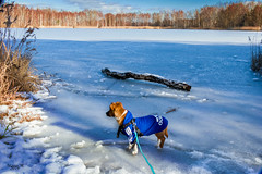Spaziergang am See (mariomüller1) Tags: hund hunde dog tiere winter see nature farbe eis schnee