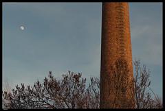 Roz 2019 (9) (***RM***) Tags: czechrepublic moravia zidlochovice country nature walk winter february nikon d850 nikkor 2470mm