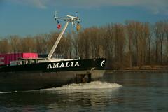 MS AMALIA (Lutz Blohm) Tags: msamalia containerschiff speyer gütermotorschiff rhein rheinschifffahrt binnenschifffahrt binnenschiffe sonyalpha7aiii sonyfe24105mmf4goss fluskilometer402 rheinzuberg