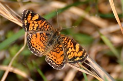 2018 05 14 041 walk in the woods, Gassaway, WV (Mark Baker.) Tags: 2018 america baker mark may north us usa virginia wv west butterfly day outdoor photo photograph picsmark rural spring united