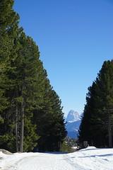Il Sassolungo sullo sfondo (Luciana.Luciana) Tags: sassolungo dolomiti alberi neve sentiero montagna