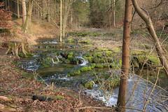 Kalksinterterrassen, Kaisinger Forst (pappleany) Tags: natur wald bach forst sinterterrassen kalksinterterrassen frühling pappleany