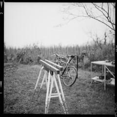 Garten (tiltdesign2016) Tags: ilfordilfosol319 ilfordhp5400asa 400800 analogphotography bw dänemark denmark canoncanoscan9000f mittelformat yashicamat124g fejø