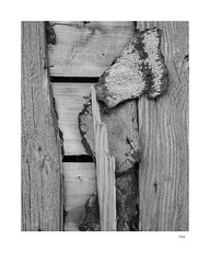 Shy (agianelo) Tags: tar paper wood fence monochrome bw bn blackandwhite texture abstract