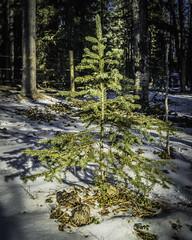 Welcome to 2019 (susan.a13) Tags: annem janet neil susan horses snow winterdogs