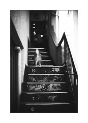 *Way home. (niko**) Tags: leica leicam2 noctilux50mmf10 e60 rolleirpx25 135 35mm filmphotography yokohama