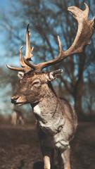 Oh deer. (malikskyds) Tags: deer animals nature sony samyang