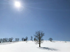 The sun warmed the day (*CA*) Tags: ct horsebarnhill winter snow trees
