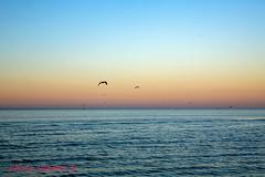 Soleil couchant à Dunkerque (louis.labbez) Tags: mer 2019 labbez nord dunkerque février 59 hautsdefrance france ciel sky orange oiseau bird seagul mouette couchant dawn sun soleil