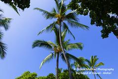 BIG-ISLAND-HAWAII_DSC2541 (Donna Molinari Photography) Tags: hawaii