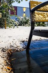 Winter Bench (Bracus Triticum) Tags: winter bench アルバータ州 alberta canada カナダ calgary カルガリー 9月 九月 長月 くがつ kugatsu nagatsuki longmonth 2018 平成30年 fall autumn september
