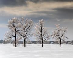 Arbres de glace -  Ice trees (paul-g-goyette-qc) Tags: arbres verglas ciel neige hiver winter