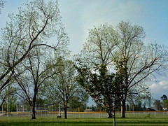 Trees At Northeast Park. (dccradio) Tags: lumberton nc northcarolina robesoncounty outdoor outdoors outside nature natural park citypark raymondbpenningtonathleticcomplex penningtonathleticcomplex northeastpark april weekend saturday saturdaynight saturdayevening evening goodevening spring springtime hp hewlettpackard hpdsccb350 tree trees treebranch branch branches treebranches treelimb treelimbs sky eveningsky