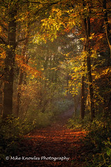 Sidelight (mikeknowles60) Tags: autumn sidelight path leaves glow
