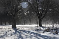 (photoeclectia1) Tags: symmetry snow blowingsnow cold algonkianpark