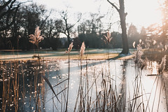 Bremen (LucasRebmannPhotography) Tags: bremen x100f fujifilm x 100 f 23mm 19mm 35mm ice frozen snow light sun winter 2019 2018 mushroom forest park macro germany deutschland licht trees lake iced