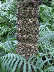 Chicago, Garfield Park Conservatory, Palm Tree Trunk with Ferns (Mary Warren 12.4+ Million Views) Tags: chicago garfieldparkconservatory nature flora plants green palmtree trunk texture leaves foliage ferns