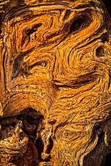Ironwood Macro (http://fineartamerica.com/profiles/robert-bales.ht) Tags: arizona forupload haybales olddead people photo places plants projects states tree welton green nature natural desert plant brown color southwest sky ironwood landscape sonoran branch dry arid southwestern vegetation forest usa phoenix olneyatesota stone outdoors saguaro northamerica brittlebush america aromatic olneya native trees tesota old sonora dead national wood cactus robertbales abstract macro