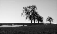 ...snow spots... (shallowcreek) Tags: bw sw landschaft landscape österreich upperaustria hausruckviertel baum tree wiese meadow schnee snow gras himmel sky