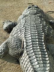 DSCF1117_R (Benoit Vellieux) Tags: france lyon 69 têtedor zoo tiergarten crocodile krokodil alligator
