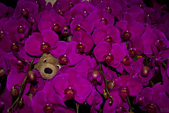 Photo (Adventures With Teddy) Tags: teddy adventures with photographers tumblr original orchid china travel blog international bug pink ninja maybenot artists