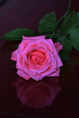 DSC_2788 (PeaTJay) Tags: nikond750 sigma reading lowerearley berkshire macro micro closeups gardens indoors nature flora fauna plants flowers rose roses rosebuds
