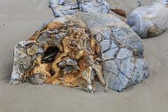 190315Stones5160w (GeoJuice) Tags: dunedin moeraki boulders concretions beach geography geology