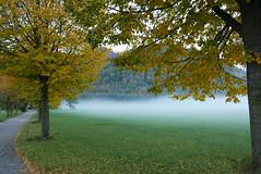 Bodennebel (Aah-Yeah) Tags: bodennebel nebel foggy misty grassau achental chiemgau bayern herbst autumn