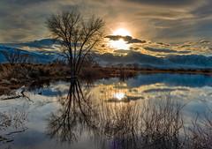 Blue Hour Marsh Single (Infinite Monkey2011) Tags: 2019wintersierratrip bluehour marsh marshreflections sierra sierramarsh