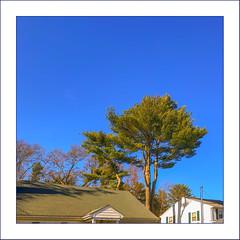 Springtime Sky (Timothy Valentine) Tags: 0419 tree large sky fbpost 2019 rooftop hrsw eastbridgewater massachusetts unitedstatesofamerica us
