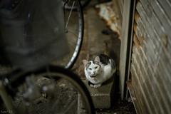 猫 (fumi*23) Tags: ilce7rm3 sony sel85f18 street a7r3 animal alley 85mm fe85mmf18 katze neko cat chat gato ねこ 猫 ソニー