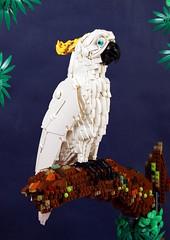 1 Yellow-crested cockatoo (timofey_tkachev) Tags: cockatoo white yellow lego afol creature moc parrot bird