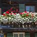 Garmisch - Altstadt (25) - Blütenpracht