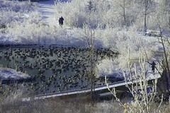duck pond (zawaski -- Thank you for your visits & comments) Tags: alberta 4hire canada beauty sunshine serves noflash naturallight snow zawaski©2019 love calgary frost ambientlight bluesky lovepeace editing canonefs55250mmf456isstm