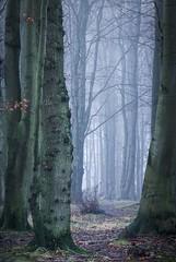 Waldweg (Petra Runge) Tags: germany nebelstimmung nebel wald misty fog forest woodland nature natur