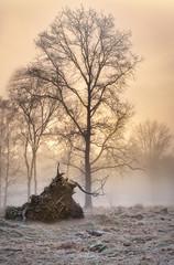 Trunk and tree in the mist. (Jochem.Herremans) Tags: fujifilm sunrise orange fog nature trunk morning light fujixt3 beautiful belgium