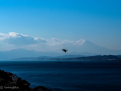 View from Enoshima (Yorkey&Rin) Tags: 2019 bird bluesky em5markii enoshima fujisawa january japan kanagawa mtfuji olympus olympusm45mmf18 p1240036 rin winter 烏帽子岩 江の島 神奈川県 青空 鳥 藤沢市 富士山