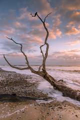 Early morning at Covehithe (Simon Brimacombe) Tags: 2019 covehithe eastanglia february northsea suffolk sunrise benacre