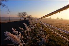 Am Rande (der bischheimer) Tags: hff zaun zäune fences winter frost lausitz canon sachsen saxonie derbischheimer