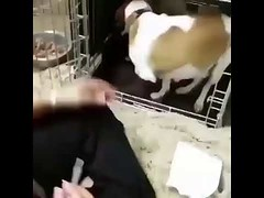 This is all my child - Funny Dog Moment (tipiboogor1984) Tags: aww cute cat funny dog youtube