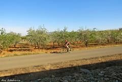 Hacer deporte. (kirru11) Tags: paseo camino persona hombre bici árboles huerta piedras cielo quel larioja españa kirru11 anaechebarria canonpowershot