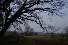 Grosses Moos (m.a.r.c.i) Tags: fujifilm xe3 fujinon xf18mmf2 schweiz suisse switzerland seeland vully murtensee murten ins anet moos grossesmoos landscape swiss nature marci torfstich
