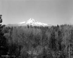 Mount Hood in Early Spring, march 2019 (Gary L. Quay) Tags: mounthood oregon parkdale snow snowcapped mountain mthood hood cascaderange spring landscape film deardorff nikkor bergger 8x10 darkroon garyquay