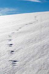 Tracks in the snow (photo-aquila) Tags: photoaquila snow schnee track trace spur winterwintertime white weis cold kalt bavaria bayern germany deutschland