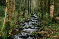 The Black Forest (freyavev) Tags: blackforest schwarzwald germany deutschland badenwürttemberg baiersbronn spring river forest outdoor hiking vsco canon canon700d mikasniftyfifty 35mm nature