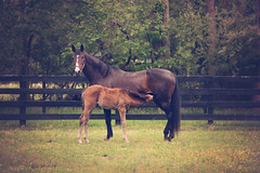 Day Trading (Funtasian) Tags: horses equestrian equine snow cold field paddock barn filly foal babyanimals colt sky grass