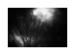 Black Forest #3 (ICM's & Polaroids) Tags: icm intentionalcameramovement painterly multipleexposure longexposure landscape blur blackandwhite bw trees forest