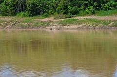 Caucaia - Eirunepé (Cap Rech) Tags: caucaia eirunepé amazonas amazônia