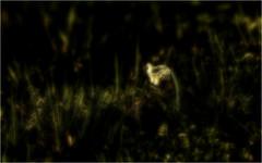 ...a secret spring awakening... (shallowcreek) Tags: bearbeitung fantasy farben colors blume flower gras wiese meadow frühling spring gelb yellow grün green licht