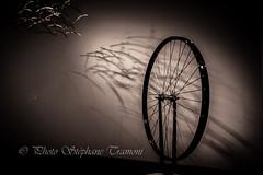 And the wheel is turning (steff808) Tags: stockholm stockholmslän suède se modernamuseet sverige svezia sweden fujifilmxe2 fujinon1024